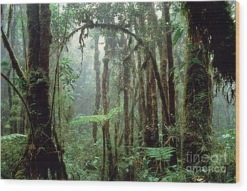 Tropical Cloud Forest Wood Print by Gregory G. Dimijian