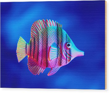 Tropical Fish Close-up Wood Print by Lawrence Lawry