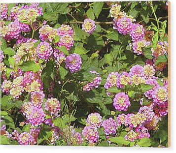 Wood Print featuring the photograph Tropical Lantana by Roena King