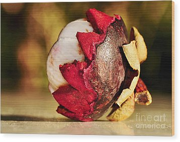 Tropical Mangosteen - Ready To Eat Wood Print by Kaye Menner