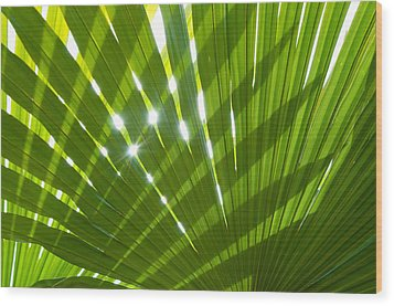 Tropical Palm Leaf Wood Print by Amanda Elwell