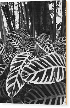 Tropical Plants On The Rainforest Floor Wood Print by Melinda Podor