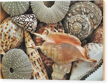 Tropical Shells Wood Print by Kaye Menner