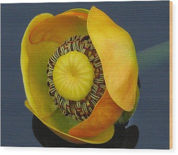 Wood Print featuring the photograph True Beauty by Shawn Hughes