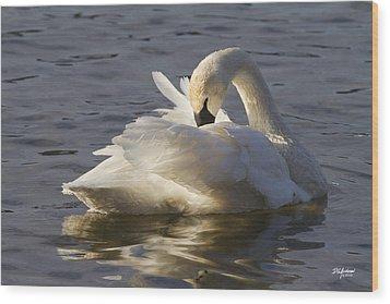 Trumpeter Swan Preening Wood Print