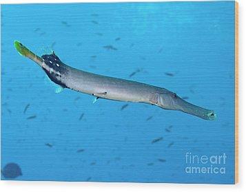 Trumpetfish Wood Print by Sami Sarkis