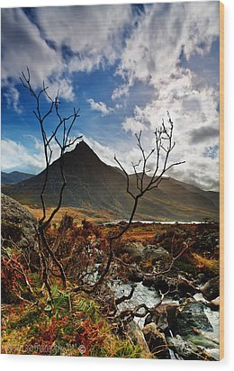 Wood Print featuring the photograph Tryfan And Tree by Beverly Cash