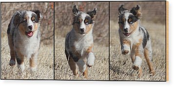 Tryptich Of Puppy Running Wood Print by Pat Gaines