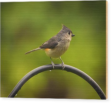 Tufted Titmouse On Pole Wood Print by Bill Tiepelman