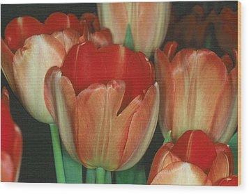 Tulip 1 Wood Print