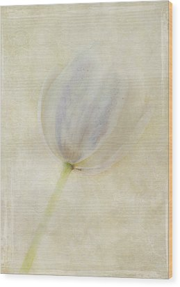Tulip 1 Wood Print by Marion Galt