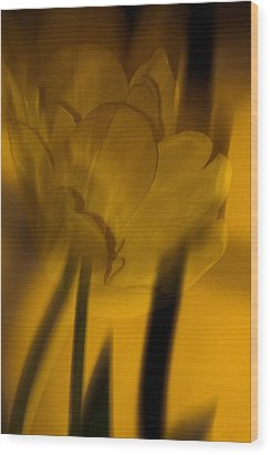 Wood Print featuring the photograph Tulip Abstract by Ed Gleichman