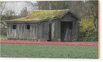 Tulip Barn Wood Print by Mitch Shindelbower