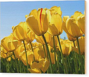 Tulip Wood Print by Dhirendra  Jaiswal