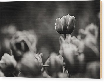 Tulip On Top Wood Print by Justin Albrecht