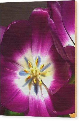 Tulip Overture Wood Print