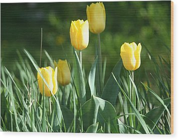 Tulip Pa Wood Print by Denise Moore