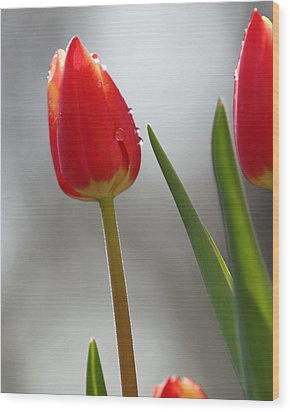 Wood Print featuring the photograph Tulip Sparkle by Coby Cooper