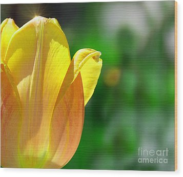 Tulip Sparkle Wood Print by Elaine Manley
