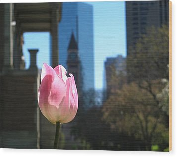 Tulip With Toronto Old City Hall Wood Print by Alfred Ng