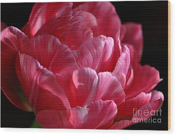 Wood Print featuring the photograph Tulipe by Sylvie Leandre