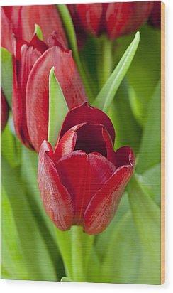 Tulips Wood Print by Andrew Dernie