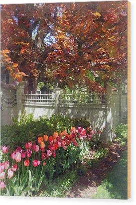 Tulips By Dappled Fence Wood Print by Susan Savad