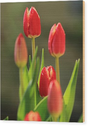 Wood Print featuring the photograph Tulips by Coby Cooper
