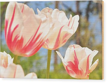 Wood Print featuring the photograph Tulips by Helen Haw