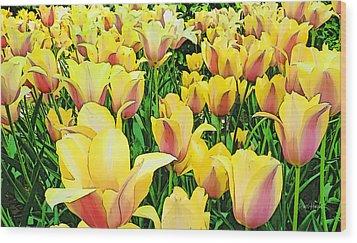 Tulips In New York  Wood Print by Russ Harris