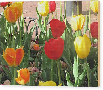 Wood Print featuring the photograph Tulips In The Sunshine by Shawn Hughes