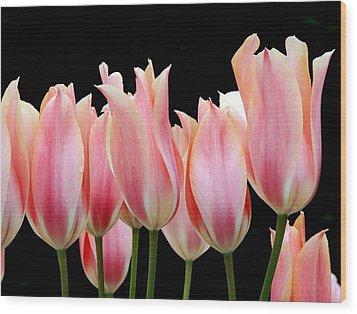 Tulips Wood Print by Nicola Butt