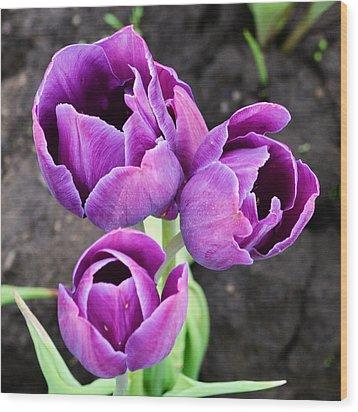 Tulips Queen Of The Night Wood Print