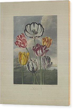 Tulips Wood Print by Robert John Thornton