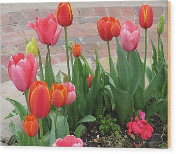 Wood Print featuring the photograph Tulips by Shawn Hughes