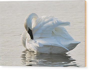 Tumpeter Swan Wood Print by Larry Ricker