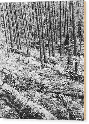 Tunguska Event Site Wood Print by Ria Novosti