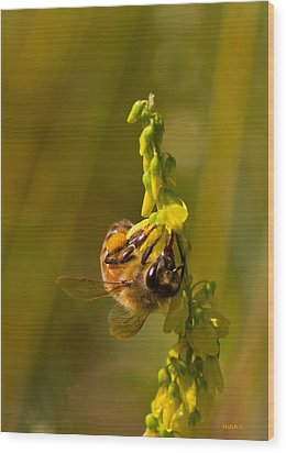 Tupelo Honey Wood Print by Mitch Shindelbower