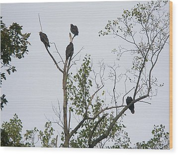 Turkey Vulture - Cathartes Aura Wood Print by Mother Nature