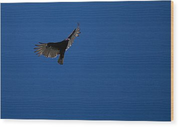 Turkey Vulture Wood Print