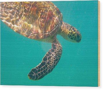 Turtle 3 Wood Print