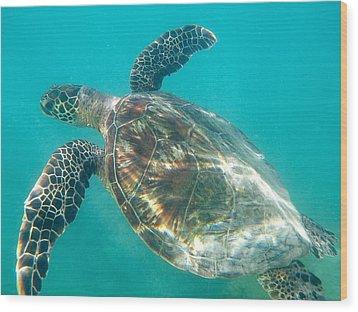 Turtle 7 Wood Print