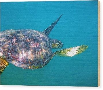 Turtle 9 Wood Print