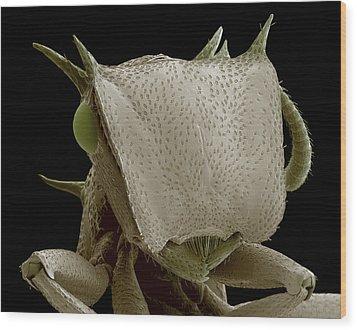Turtle Ant's Head, Sem Wood Print by Steve Gschmeissner