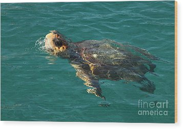 Wood Print featuring the photograph Turtle by Milena Boeva