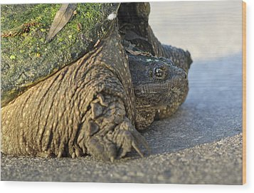 Wood Print featuring the photograph Turtle by Nick Mares