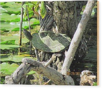Turtle Sun Wood Print by Thomas Sterett