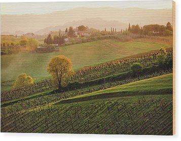 Tuscan Vinyards Wood Print by John and Tina Reid
