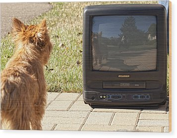 Tv Watching Dog Wood Print by Susan Stone