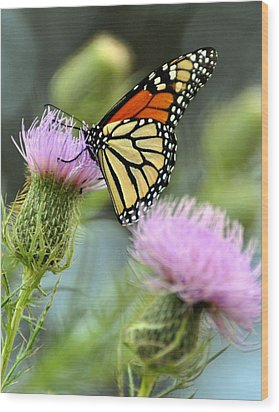 Twin Thistle Butterfly Wood Print by Marty Koch